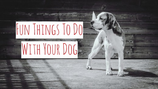 Fun Things To Do With YourDog